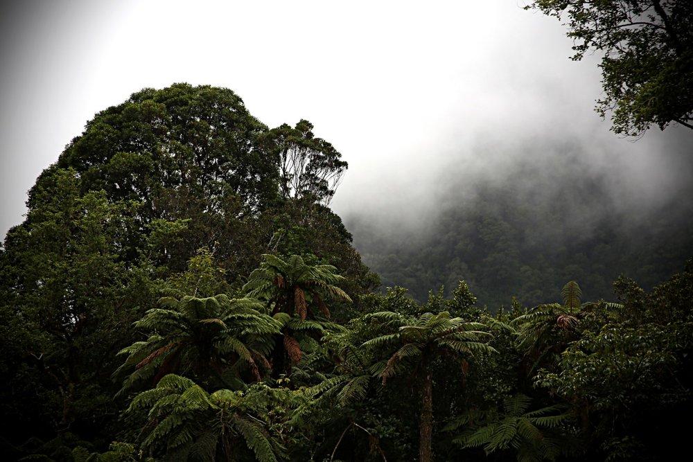 Tai poutini national park (Large).jpg