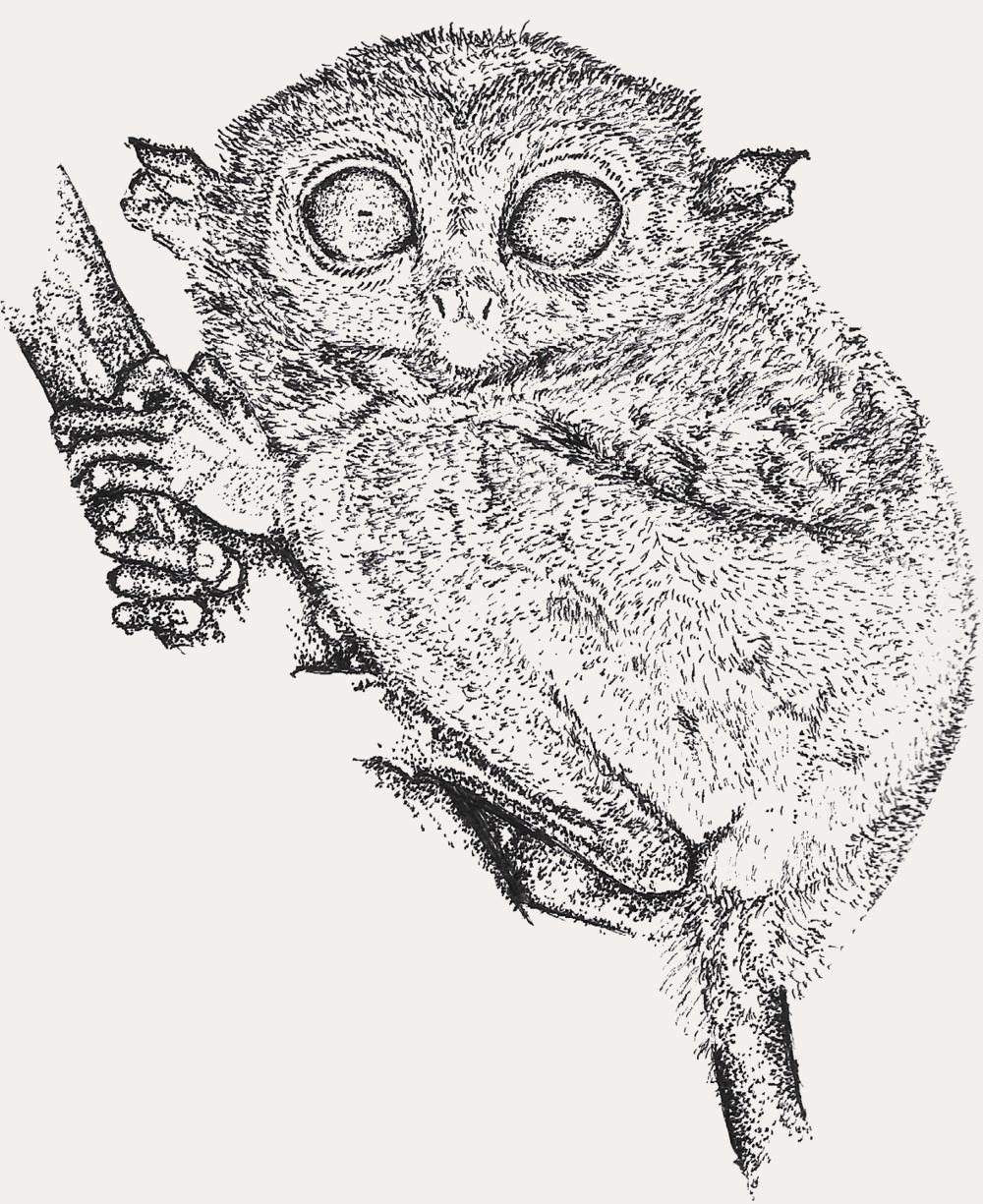 Illustration by  Angelo Esperanzate