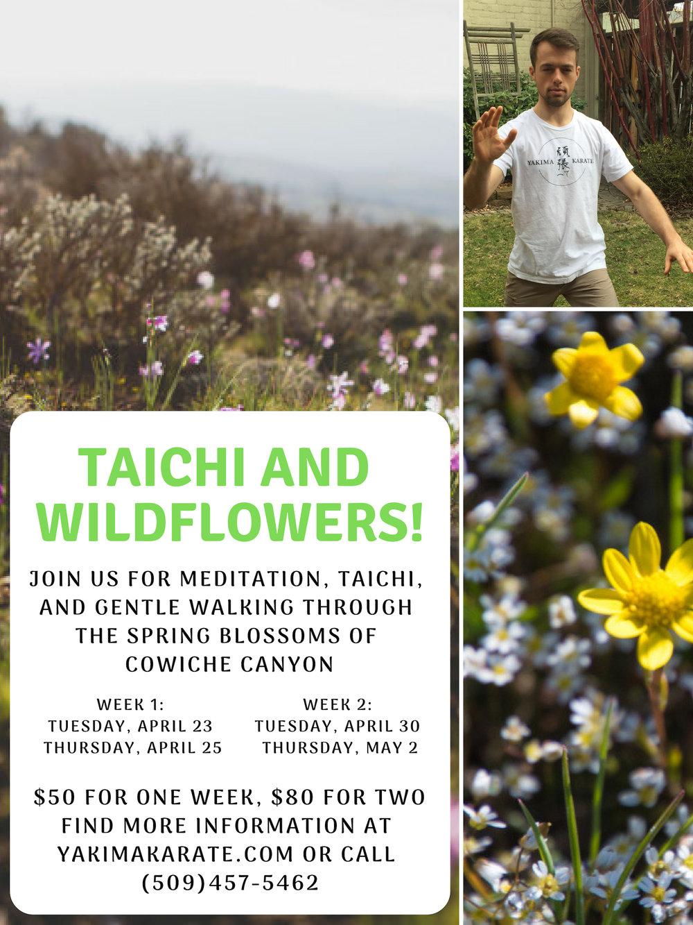 Taichi and Wildflowers.jpg