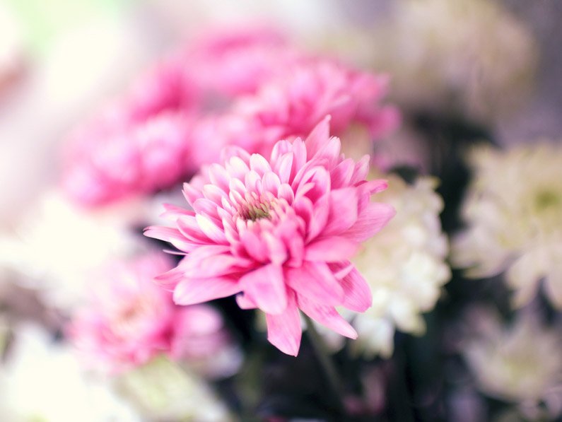summer-spring-flower-pink.jpg