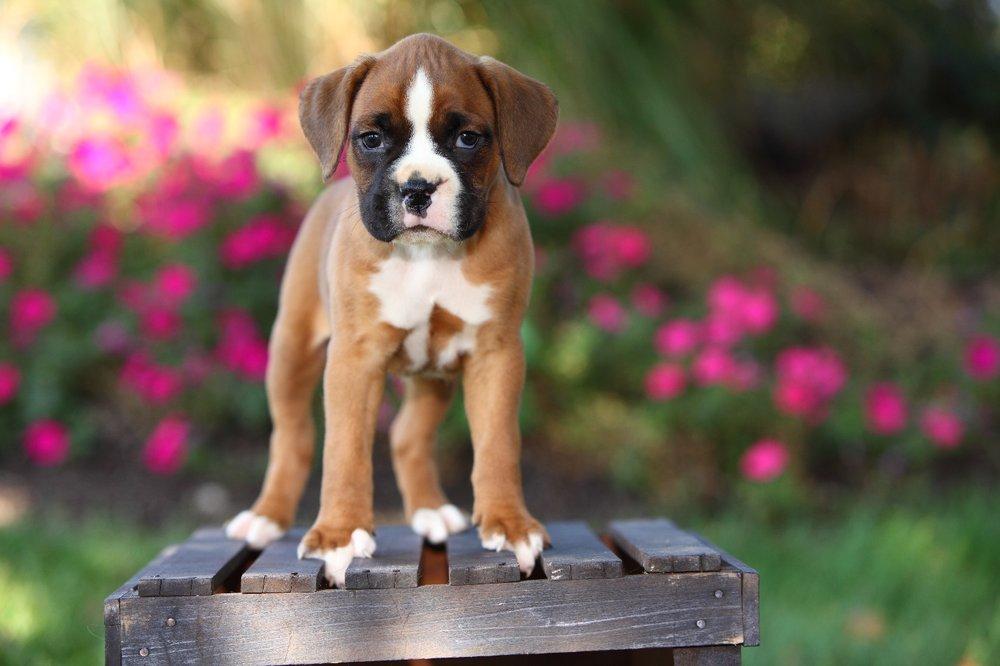 Copy of puppy.jpg