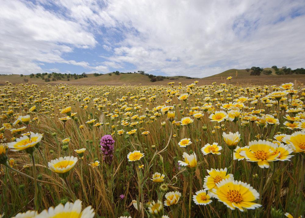 San_luis_obispo_county_ranch_land.jpg