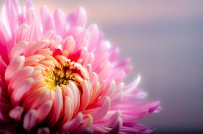 Photo courtesy of pixabay.com