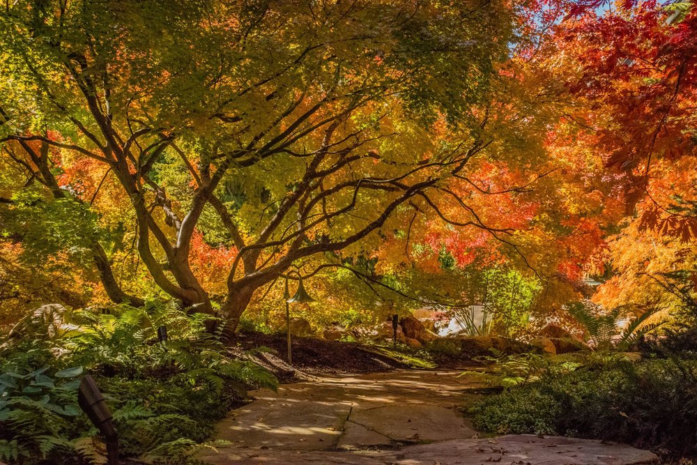 Legacy Gardens - Fall 2017.jpg