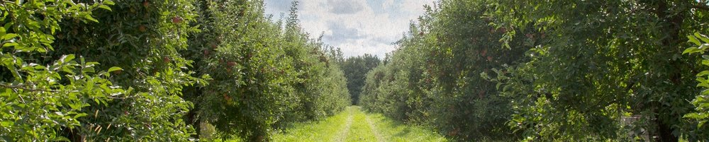 rootstock-orchard_Clipped.jpg