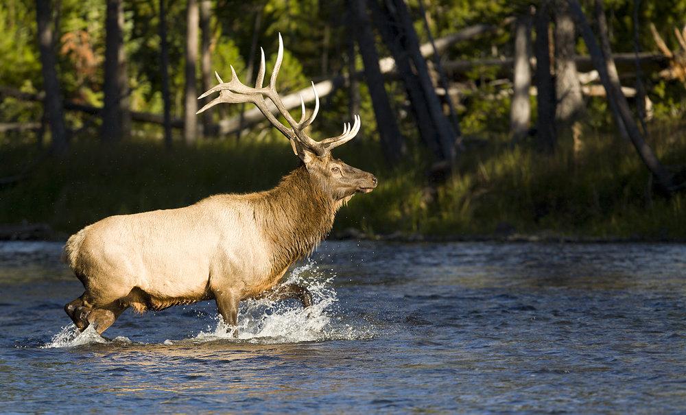 The TransRockies mountain bike stage race – elk river crossing