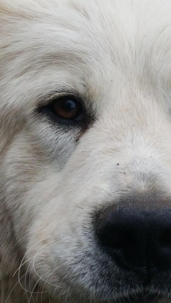 sasha-closeup-11.jpg