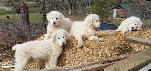 pups on straw.jpg