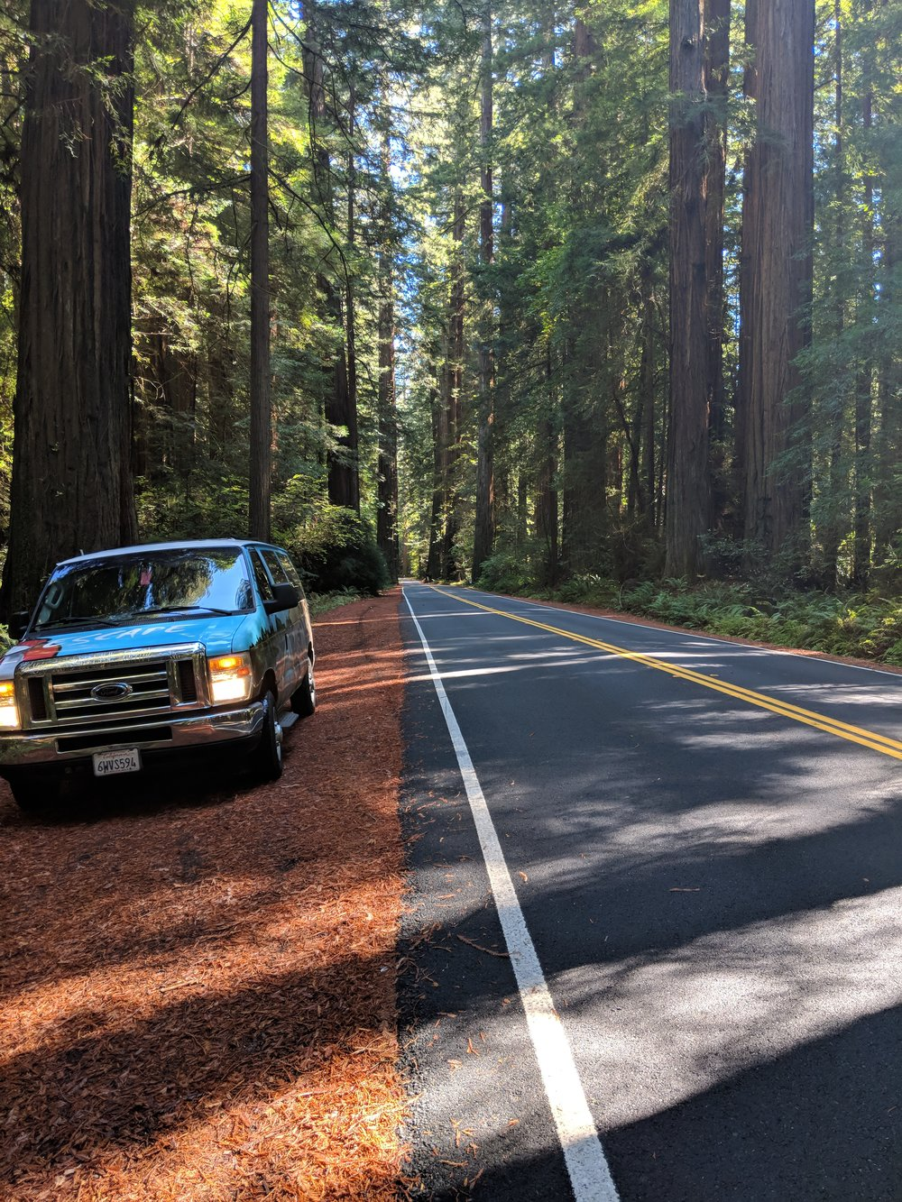 Roadside in the Avenue of the Giants, Humboldt Redwoods State Park