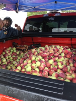 Holy s#$% that's a lot of apples!
