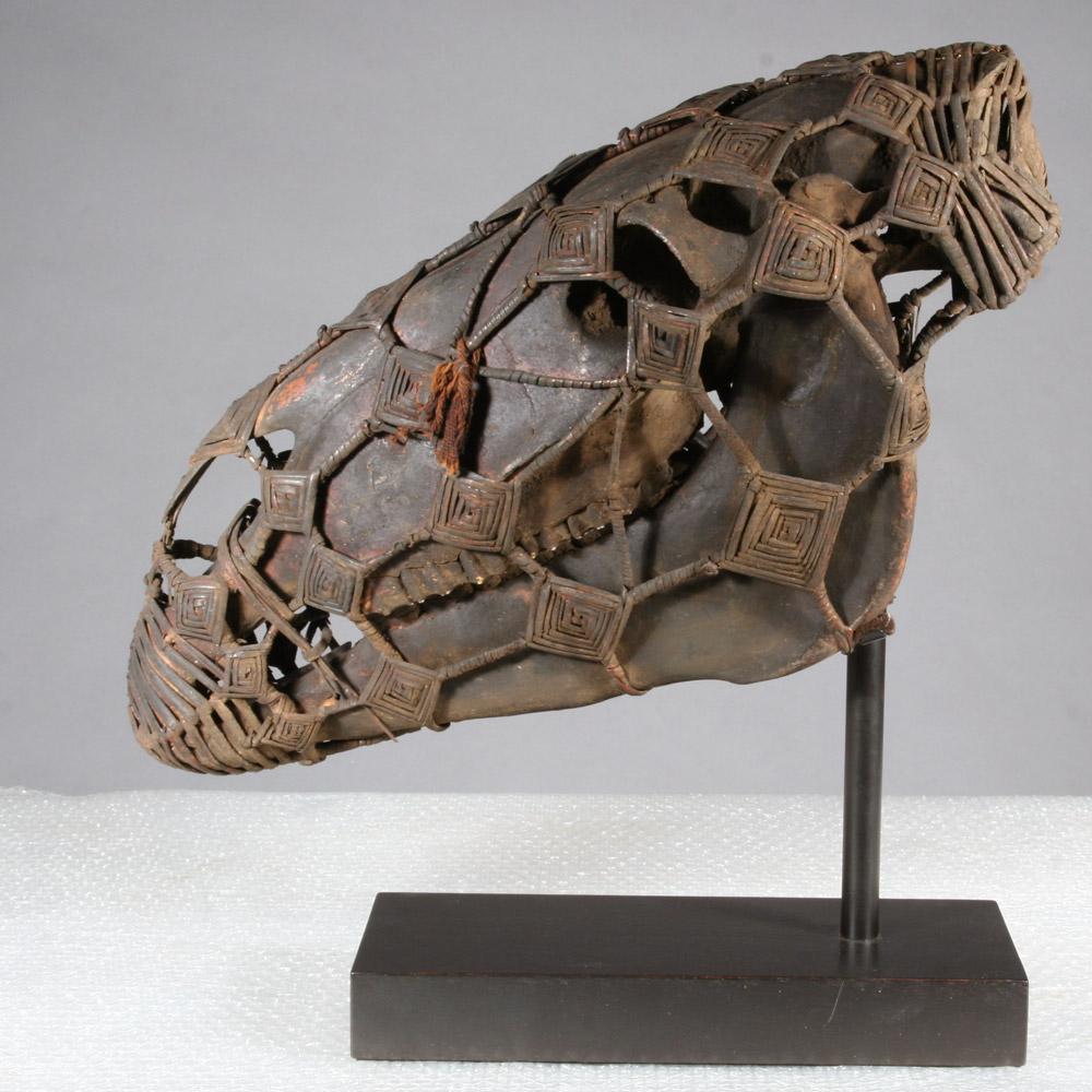 horse-skull.jpg
