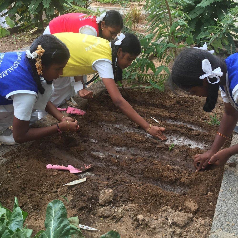 school_vegetable_garden_9782.jpg