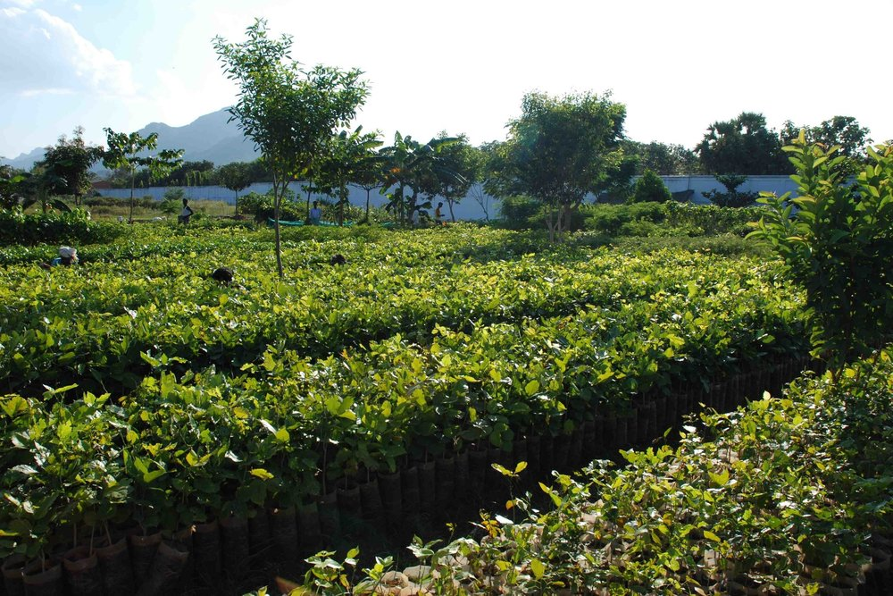Green Sakthi Tree Nursery, home to native saplings of South India.
