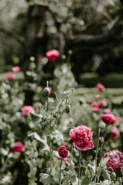 Hopewood House - Weddings - Constance & Nick - Shot 16 - The Flowers Blooming.jpg