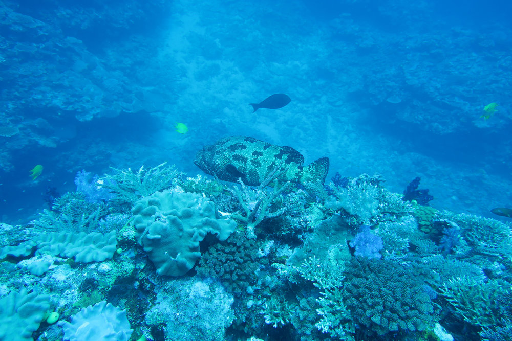 Fiji-Colourful-Coral-and-Fish.jpg