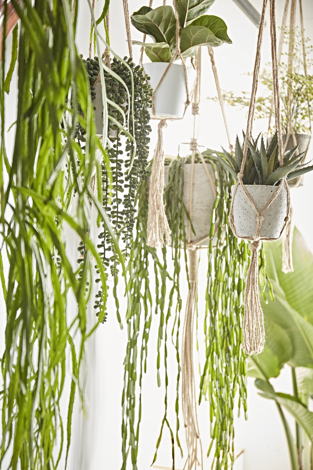 Plant Life - The trend for flora, ferns, succulents, cacti and all things green, lush and tropical continues to grow in popularity across interiors and interior design.