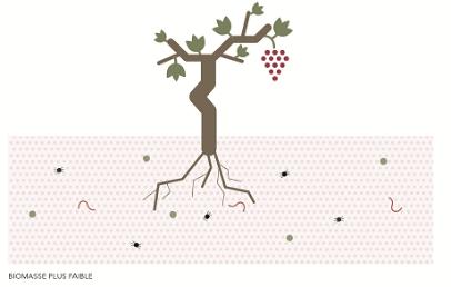 La vigne, dans un sol tassé, accablé par les pesticides, les fongicides, les herbicides se voit, peu à peu appauvrie de sa microflore et faune. Les relations entre racines et sol deviennent plus difficiles, l'azote est moins fixé et, tout au bout de la chaine, le vin est moins complexe