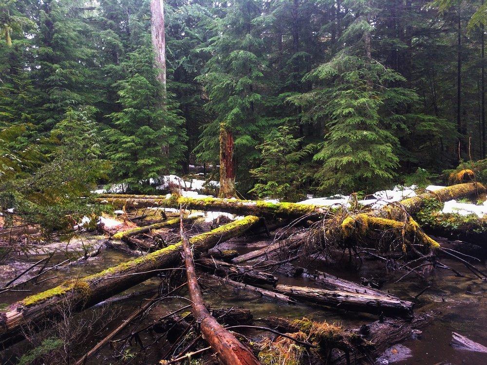 Mt-Rainier-Forest-Creek
