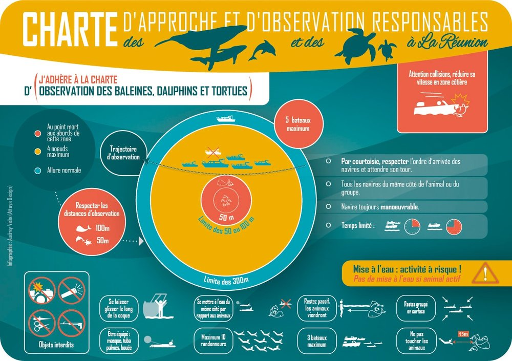 The guidelines that everyone have to respect while approaching and interacting with humpback whales in Reunion Island