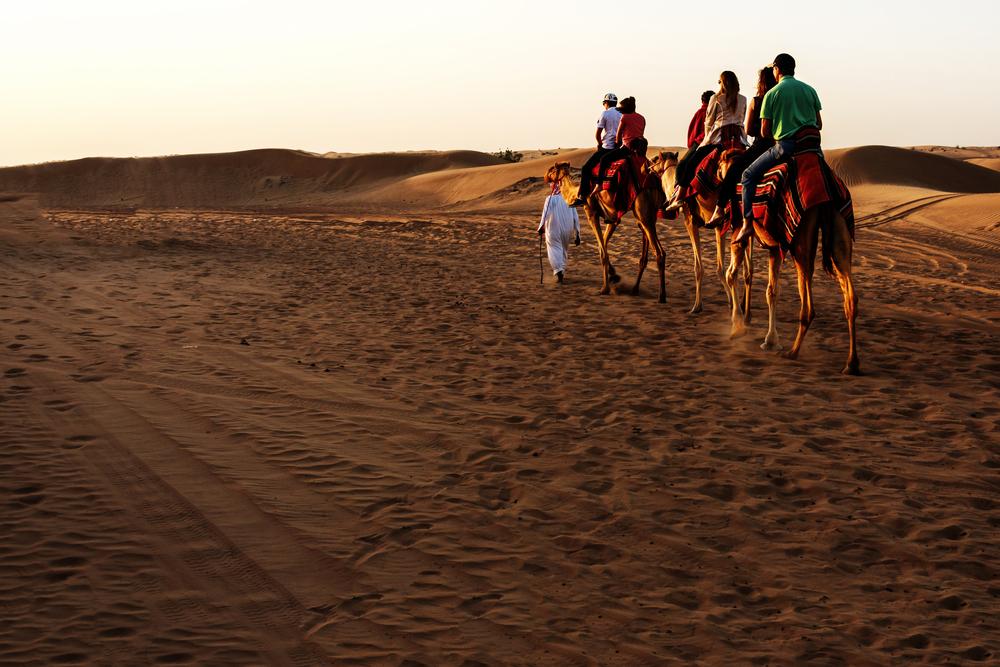 Kameler i solnedgang