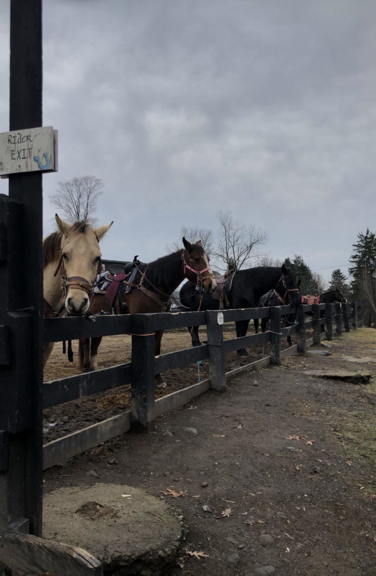 Horses wait for riders at Pine Ridge Dude Ranch.  Photo Credit: Frahmida Usman