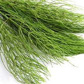 Plant Collagen  Contains low molecular weight amino acids for optimal absorption and utilization by the body.