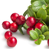 Arbutin (Bearberry Extract)  Blocks tyrosinase to effectively lighten discoloration and age spots on the skin. Tyrosinase controls the production of melanin in the body; when tyrosinase oxidizes, age spots and pigmentation occur in the skin.