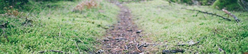 Bread-Crumb-Trail.jpg