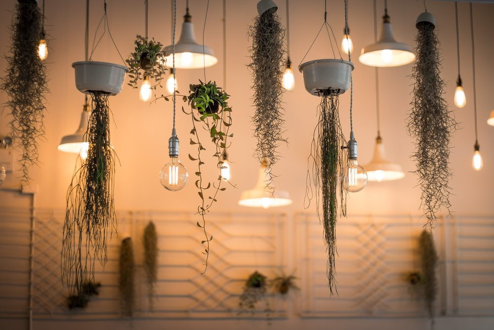 lightbulbs-plants