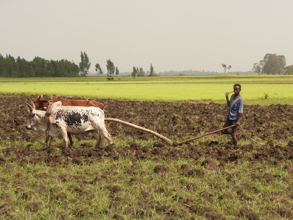 Farmer plowing.jpg