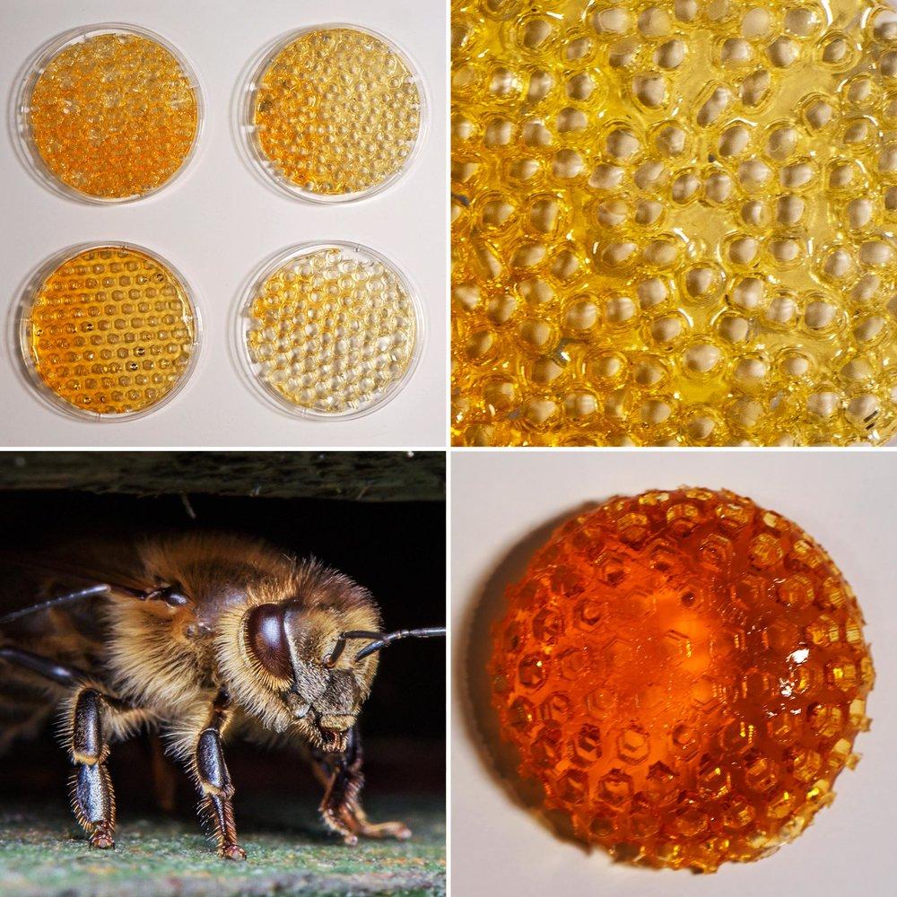 Bee_02b.jpg