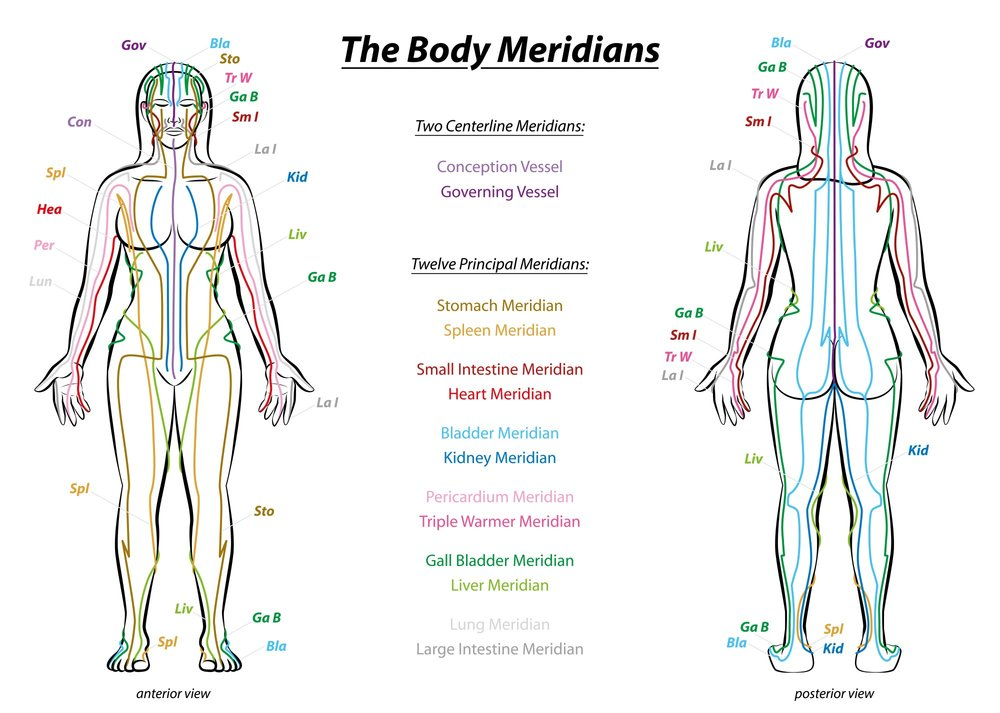 The Meridians, the Primo Vascular System and the Brain — QUANTUM YOGA