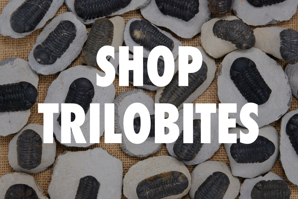 Trilobites_2.jpg