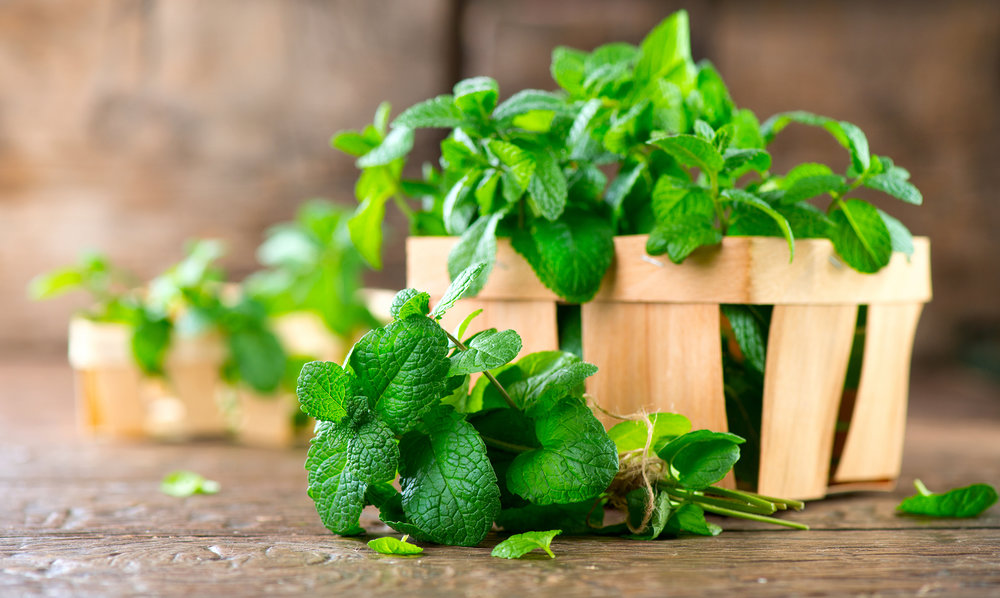bigstock-Mint-Bunch-of-Fresh-green-org-192672634.jpg