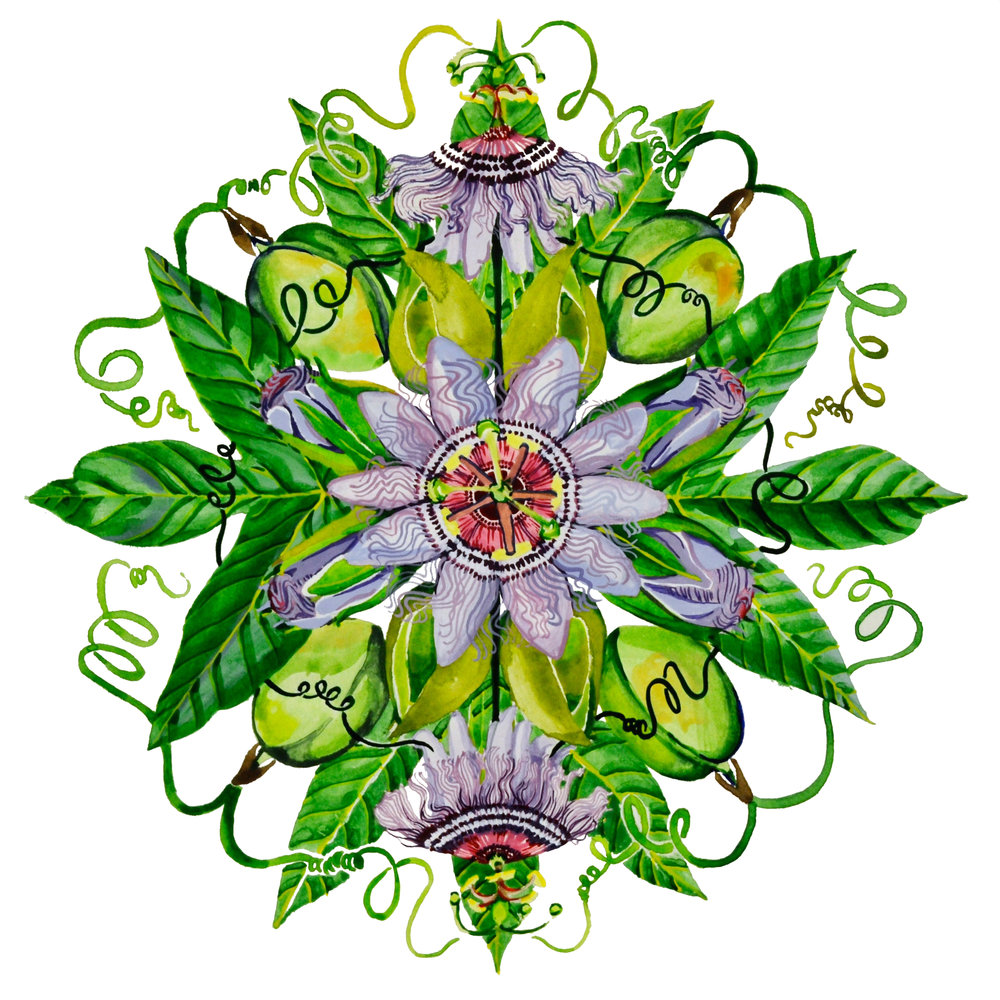 Passionflower (clean up with brush).jpg