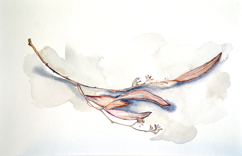 Eucalyptus I, Watercolor on paper, 12%22 x 18%22.jpg