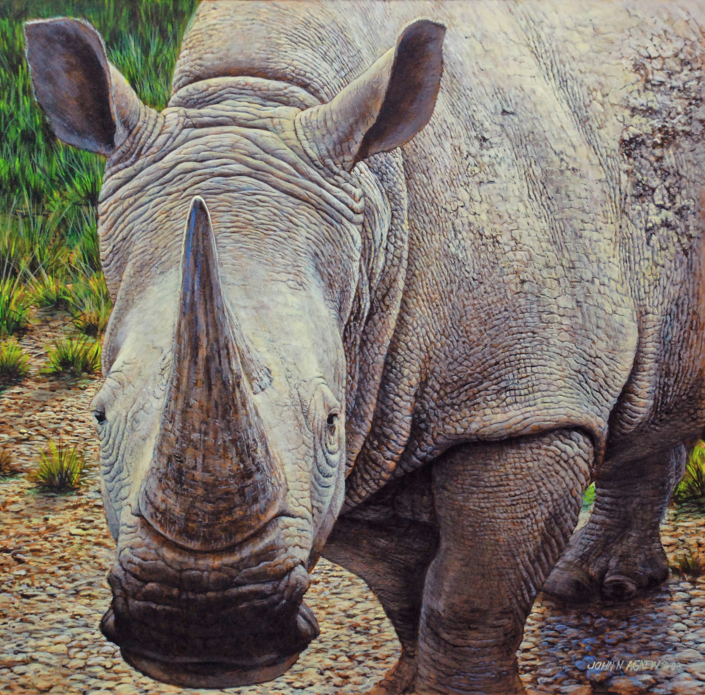 JOHN H. AGNEW, WHITE RHINO  ACRYLIC ON PANEL, 20 IN. X 20 IN.