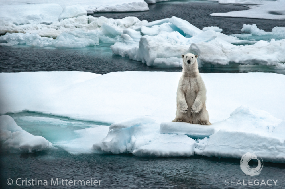 Cristina Mittermeier, Polar Boy  Digital Chromogenic Print on William Turner Cotton, 20x30 in.