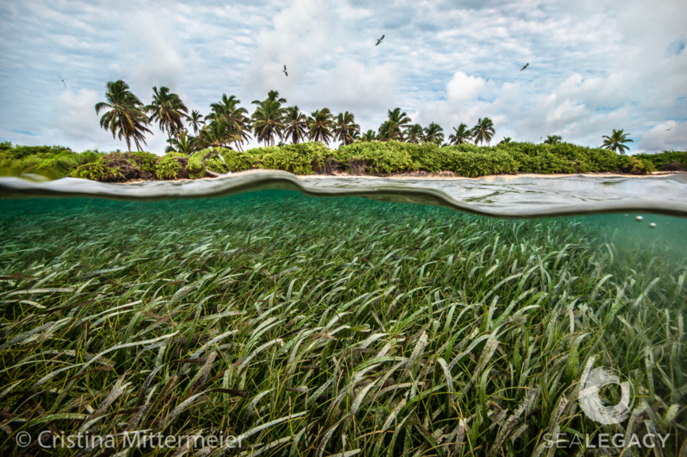 Cristina Mittermeier, Miskito Coast, Honduras  Dye Sublimation Print on Metal, 40x60 in.