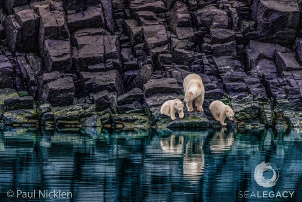 Paul Nicklen, The Long Summer's Wait  Dye Sublimation Print on Metal, 40x60 in.