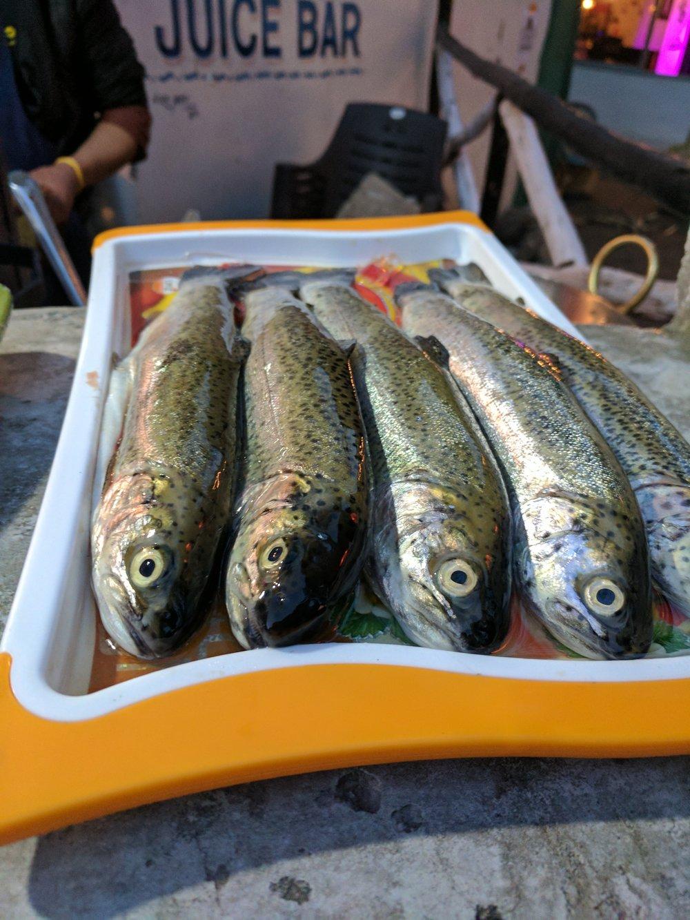 Trout Fish, Manali