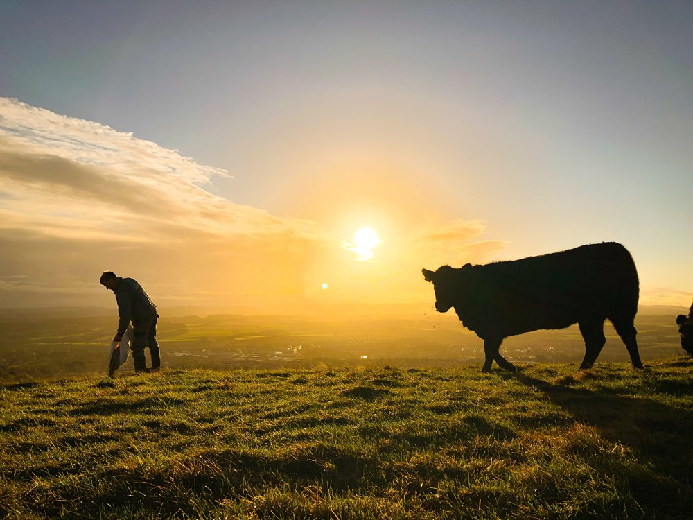 Farm Shop - We rear Aberdeen Angus cattle and have a growing flock of ewes and lambs which are available to buy directly from our farm shop this Spring