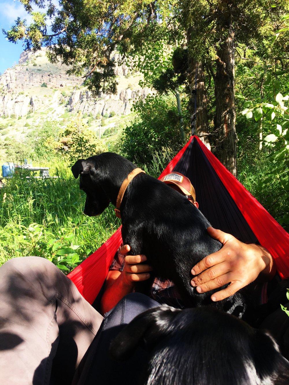 hammock-puppies-lander-blog.jpg