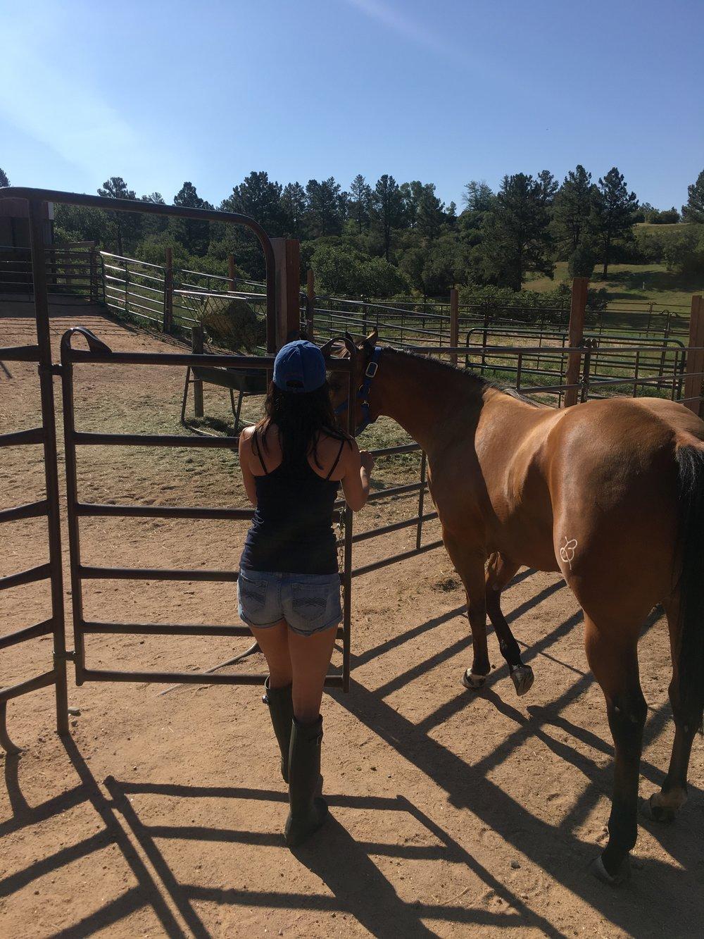 morning-chores-horse-sitting.jpg