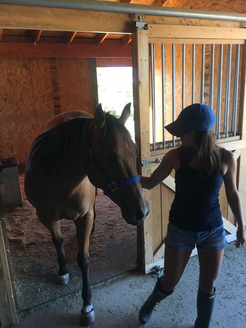 horse-sitting-daily-chores.jpg