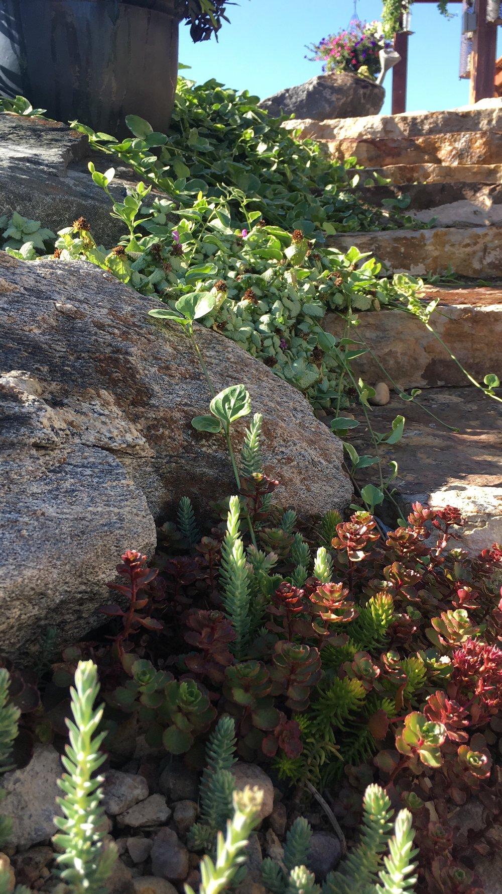 succulents-outside-colorado.jpg