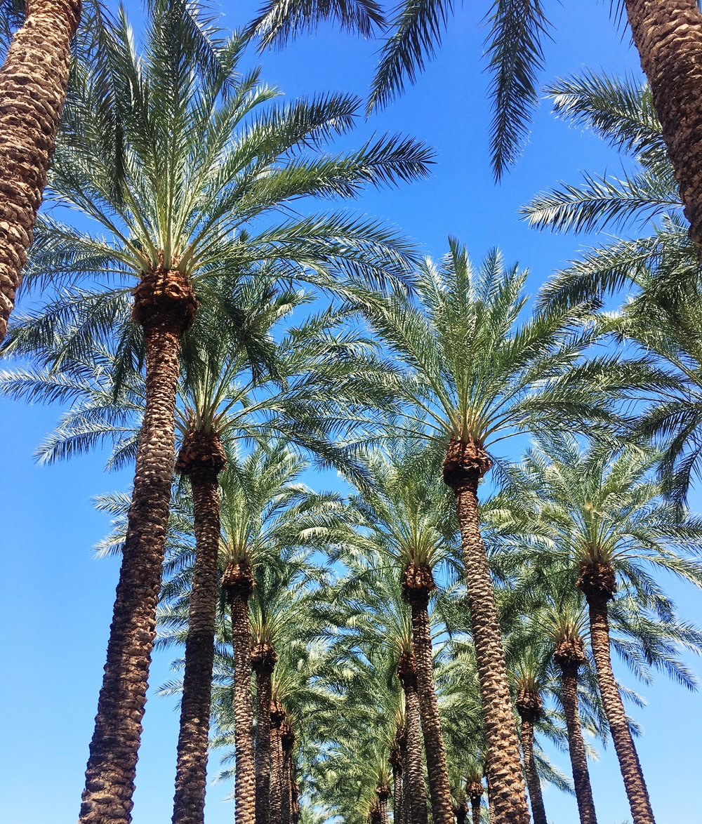 arizona-palms.jpg