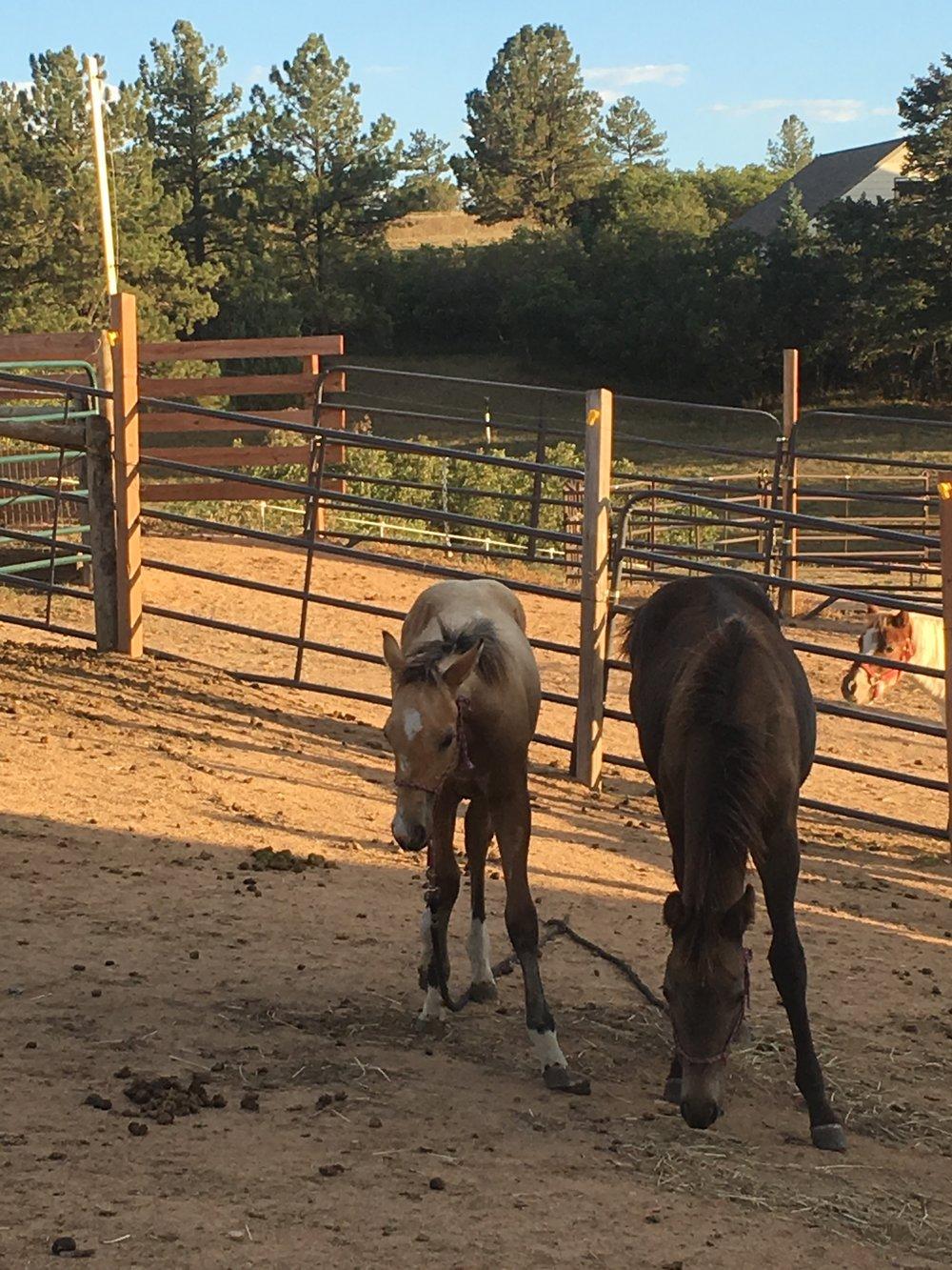 horse-haul