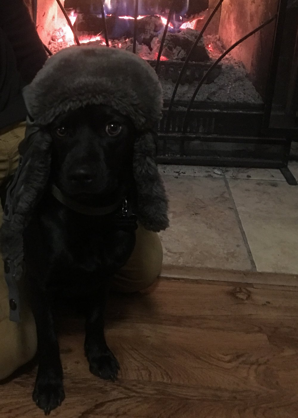 winter-puppy.jpg