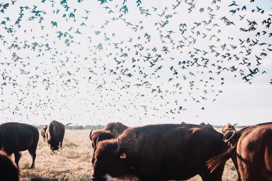 Saving the Soil Through Regenerative Ranching - December 6, 2018